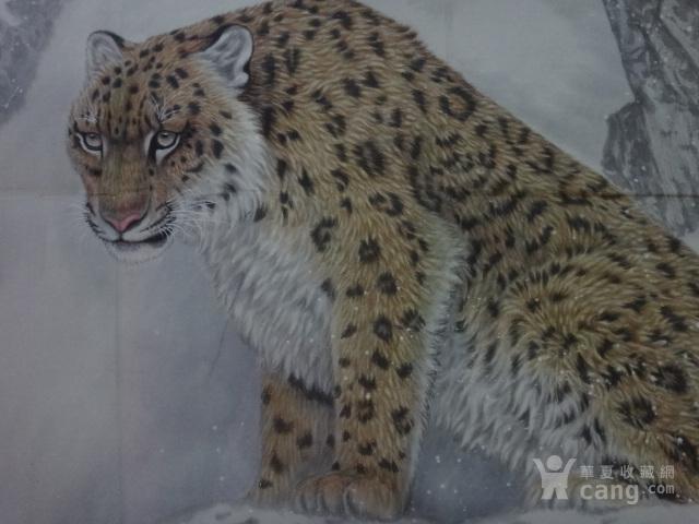 方楚雄初中图_方郑州豹子图价格_方楚雄豹子楚雄的中等豹子图片