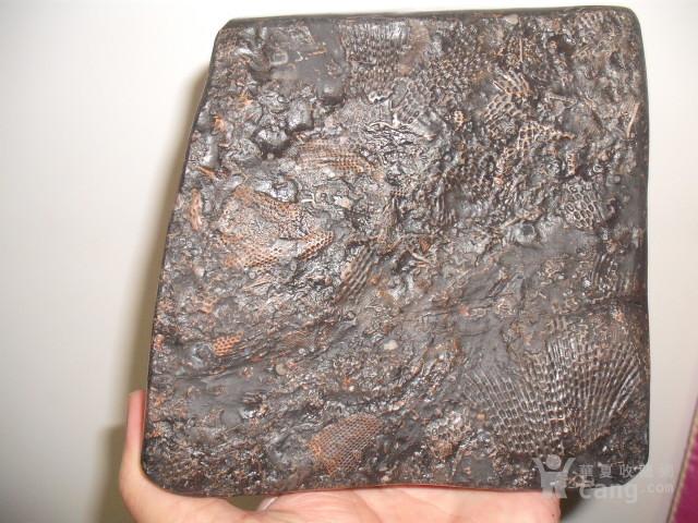 四亿年前志留纪远古海洋中的窗格苔藓虫化石1