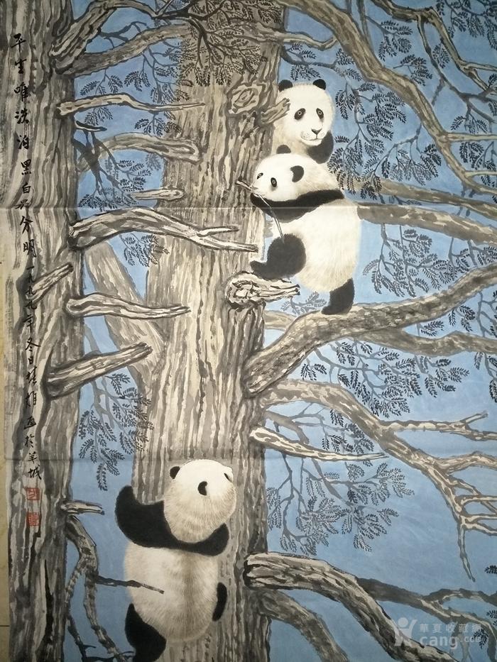 方楚雄.熊猫图_方楚雄.熊猫图种子_方楚雄.熊猫学生初中国产价格图片