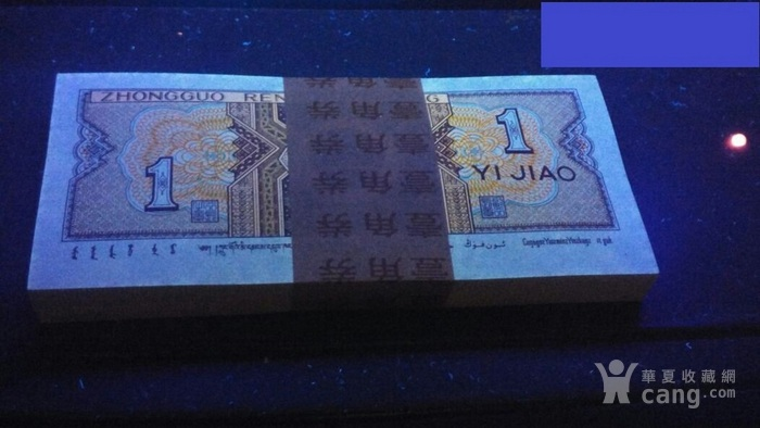 8001金牡丹效果强荧光一捆