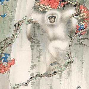 田世光 白猿图