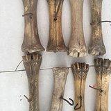 老骨头件。8棵