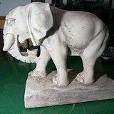 解放初期白石大象