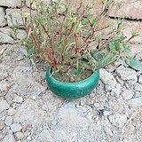 石湾窑花盆