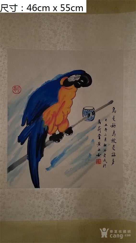 国画鹦鹉的画法步骤