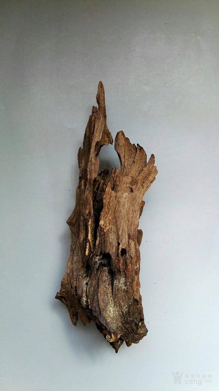 一块有淡淡香味瘦 漏 透的朽木山子