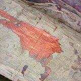 小叶紫檀原木保真包退80一斤