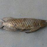 白铜鲤鱼摆件