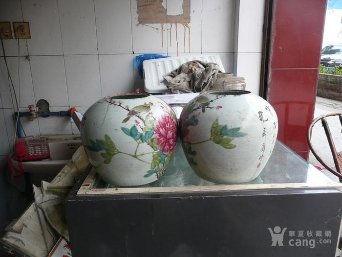 只做老货 标本清富贵白头花鸟罐一对